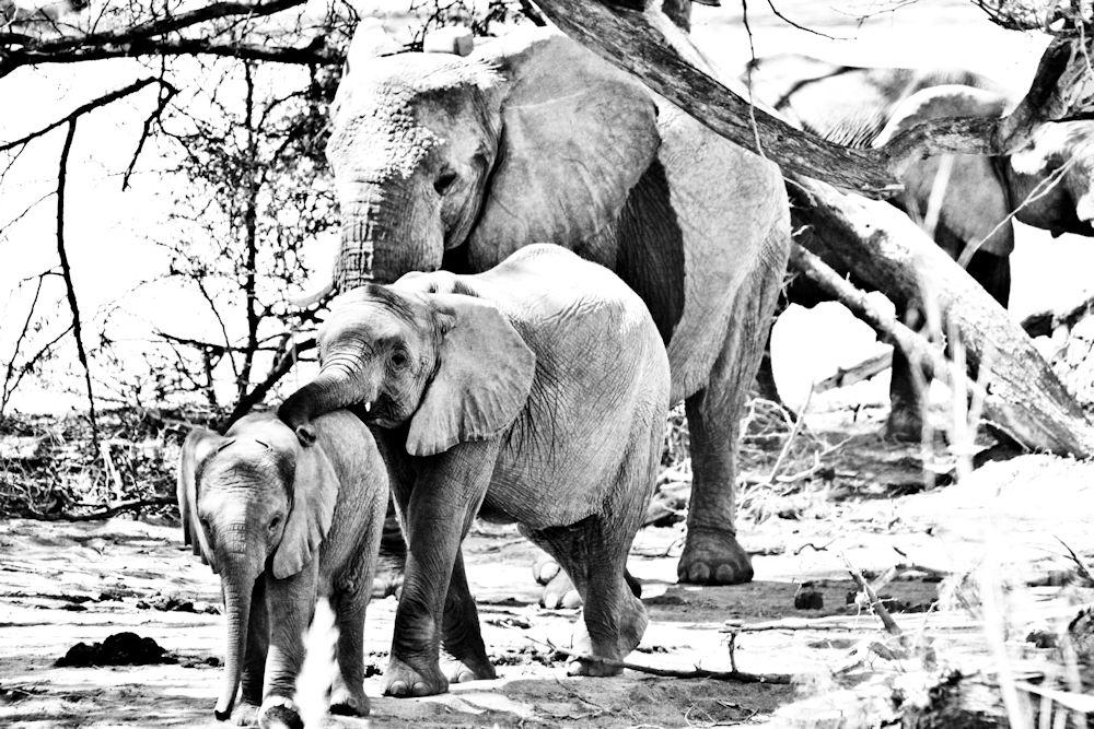 ELEPH_005 * La petite famille