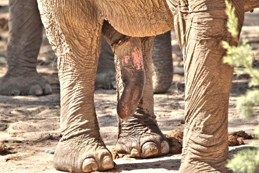 ELEPH_001 * Un éléphant , ça trompe